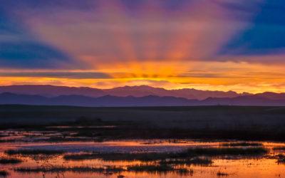 Fowler Sunrise