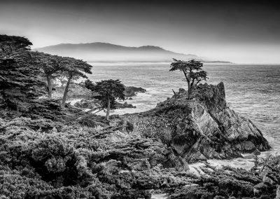 Carmel Lone Pine